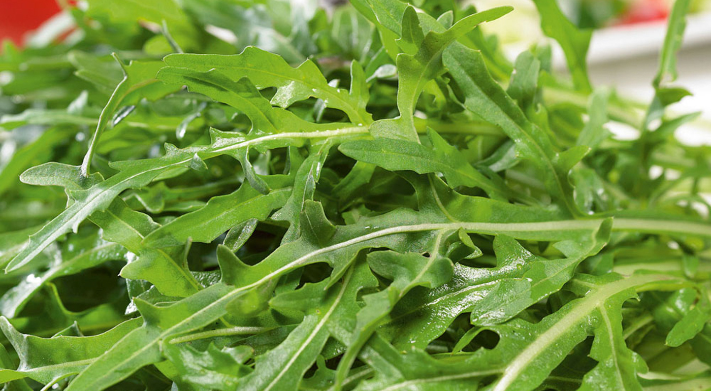 Salaatin siemenet