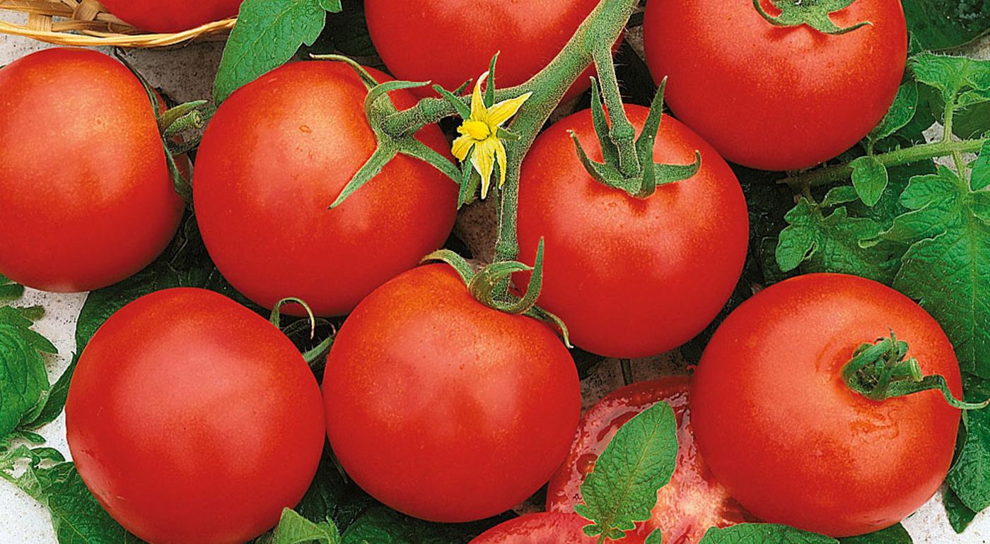 Tomaatin siemenet